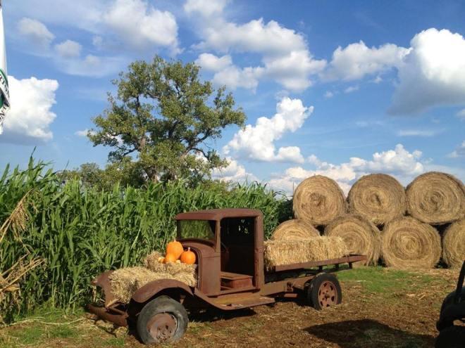 barton hil farms five